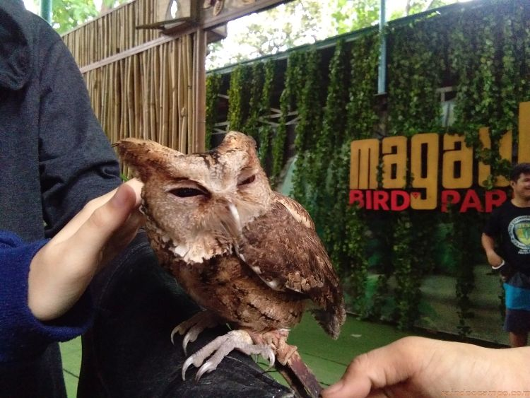 A Memorable Visit to the Magaul Bird Park and Jest Camp in Subic