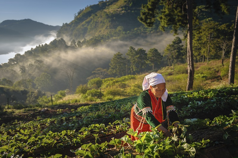 Guide To Sustainable Tourism In Chiang Mai, Thailand