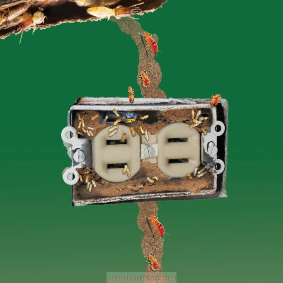Did You Know That Termites Can Cause Home Fires?
