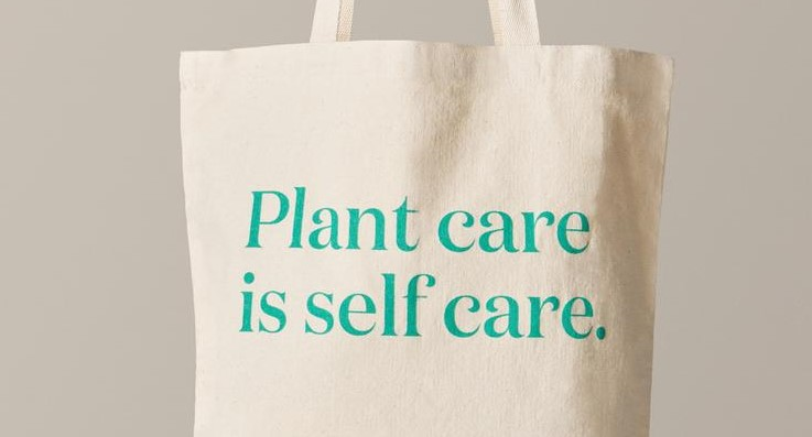 Plant-Care and Self-Care Reminders For a Clean and Healthy Home