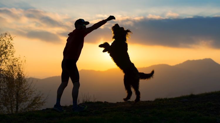5 Fun Activities You Can Do With Your Dogs This Summer