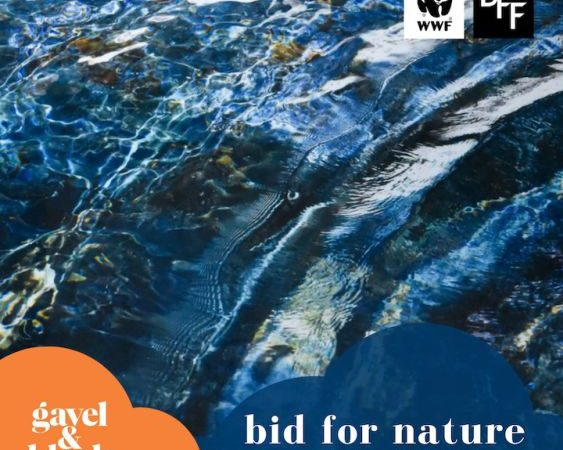 BID FOR NATURE – An Online Auction For The Environment