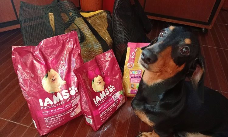 5 Pedigree Doggy Chows to Buy on Shopee this September